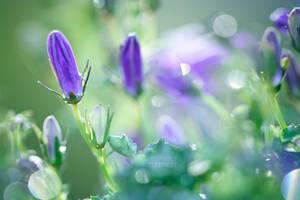SPRING BLUES by ArwenArts