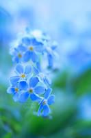 SPIRIT OF BLUE by ArwenArts