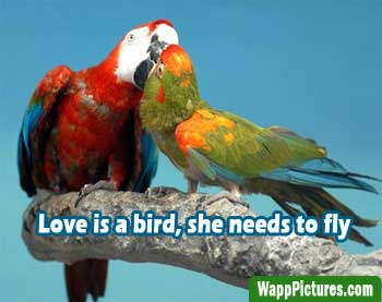 Cute-love-birds-kissing-whatsapp-pictures by wapppictures