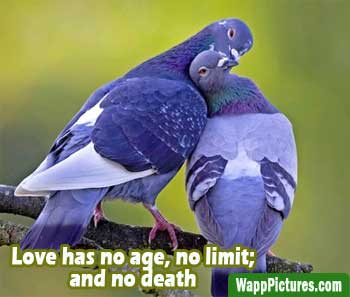 Whatsapp-images-for-cute-love-birds by wapppictures