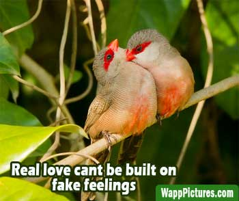 Whatsapp-pictures-love-birds-getting-in-romance by wapppictures