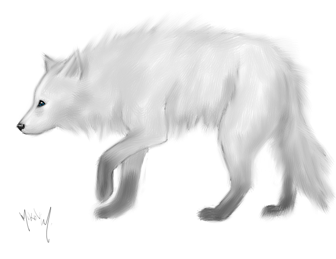White And Blue Wolf White Wolf With Blue Eyes by