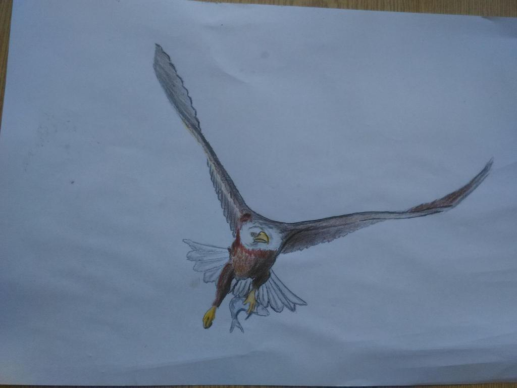 Bald Eagle by Martinkarovic