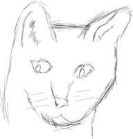 Cat by aldude999
