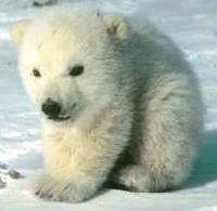 wierd polar bear by minni-man