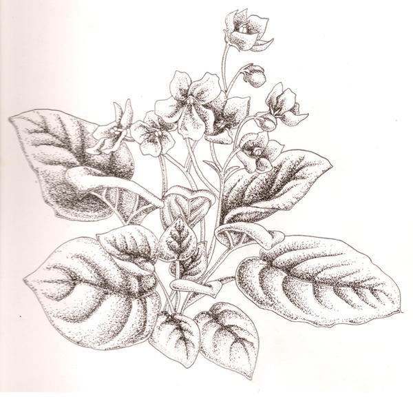 Line Drawing Violet : African violet stippled by pyrochic on deviantart