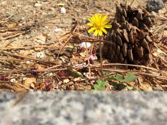 Tiny dandelion by sh20000sh