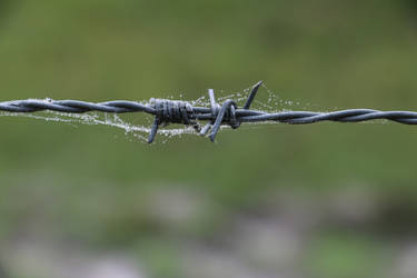 barbed wire by ArtyWarrior865