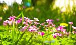 Flowers at Casamari
