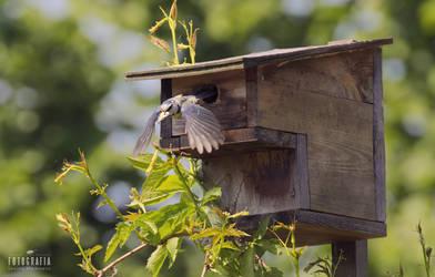 Flying bird by esecret
