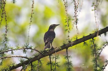 A bird on a branch by esecret
