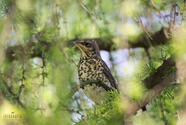 A bird on a tree by esecret