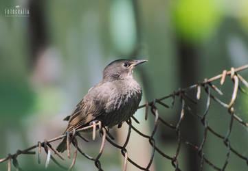 Bird by esecret