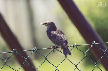 Bird on the fence by esecret
