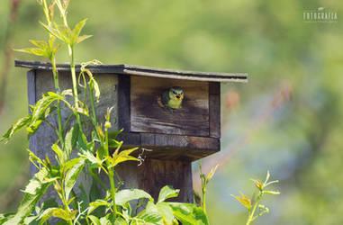 Bird chick by esecret