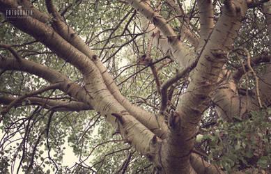Tree by esecret