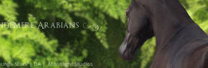 Wyndemere Arabians - Stable Banner