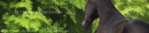 Wyndemere Arabians - Stable Banner by Moonlight-Art-Studio