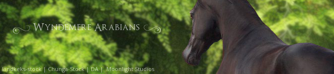 Wyndemere Arabians - Stable Banner by Moonlight-Art-Studio