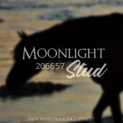 Sunset Dream by Moonlight-Art-Studio