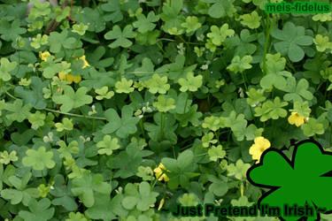 Happy St. Patricks Day '',