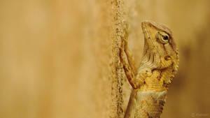 Garden lizard | I am watching you by Prabhjot-Singh