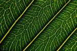 Rivers of the leaf  II