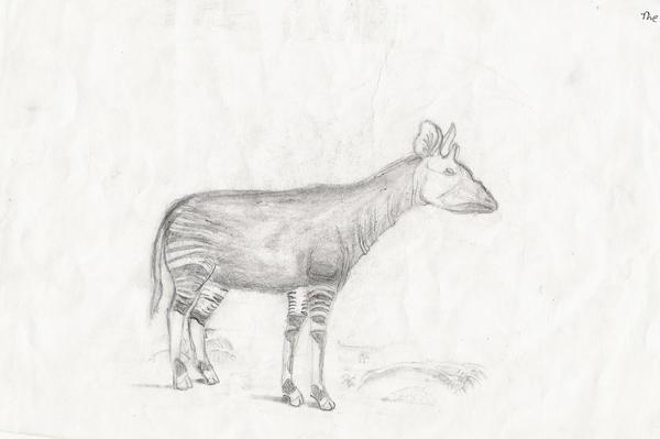 The Okapi by fullhex