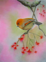 Cute Bird by AmaniWarrington