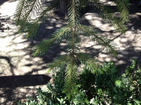 Pin Tree