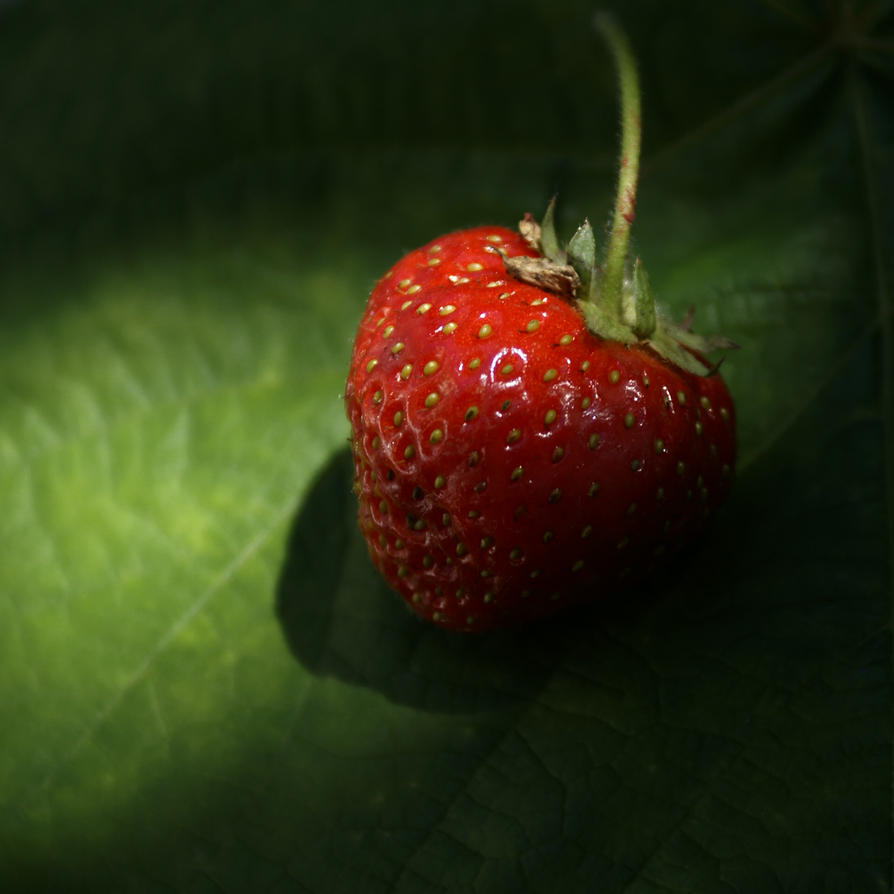 Strawberry by baraniaczek