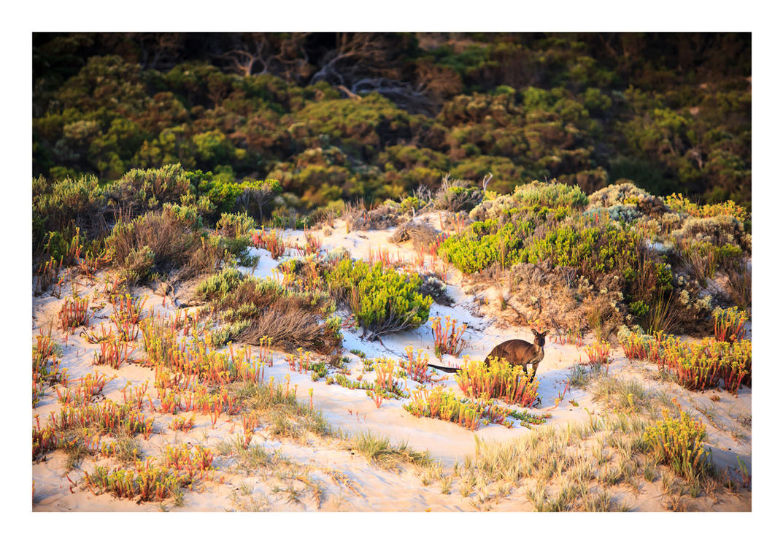 Kangaroo Island by GVA