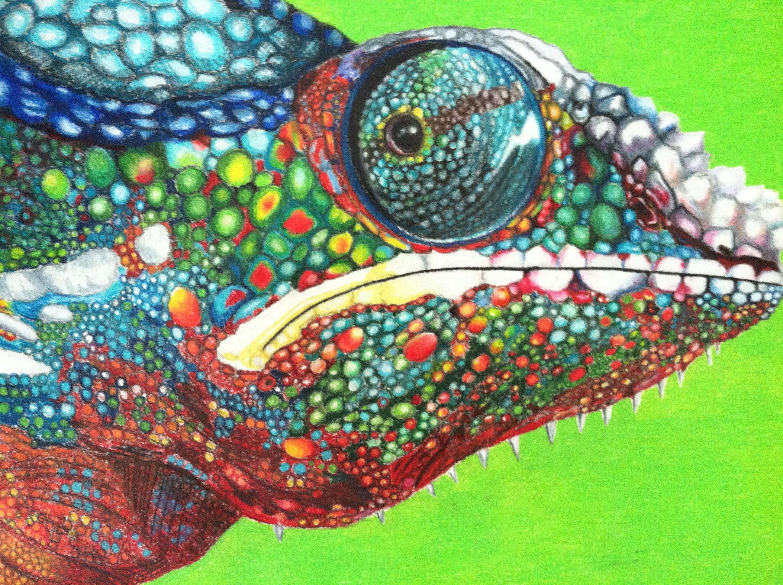 Colorful Chameleon by Wajanja on DeviantArt