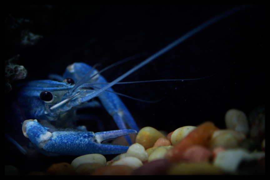 Zhe Blue Lobster Lord, HAS COME BACK!! Dx He__ll_Mess_You_Up_by_troy_rojewski
