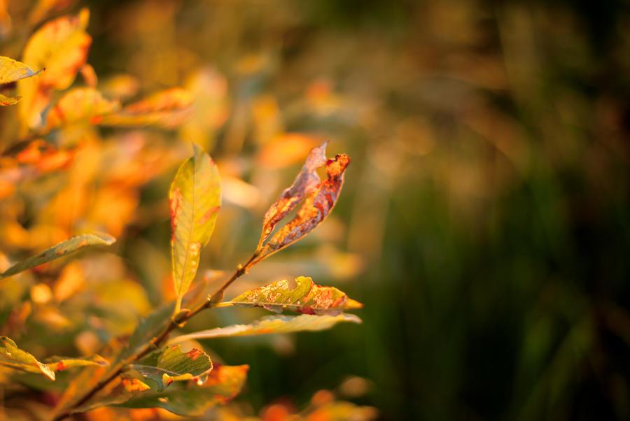 Leaves at Dusk by linderel