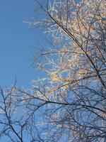 frostbite by linderel