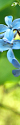blue floral tag by linderel