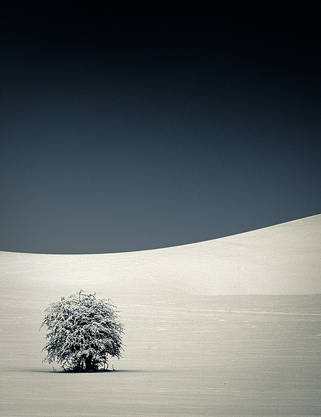 Lonely Tree 2010 by janplexy