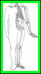 anatomie by ich-bin-gott