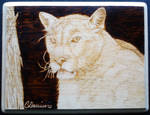 Mountain Lion by ChristinasWerkstatt