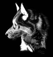 Wolf Scratchboard by Frabulator