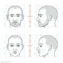 Head proportions by JeffSearle