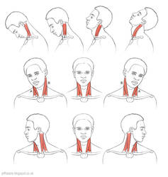 Action of the neck