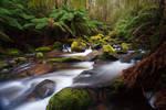 Toorongo River 3