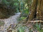 Woolgoolga Creek