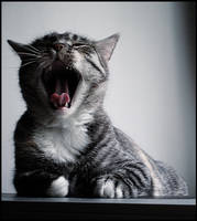 Cat Cat Cat xD by Ariverrr