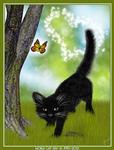 World Cat Day 2013