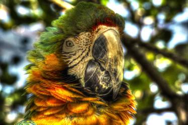 Arara Close Up Make up by Arkinhas
