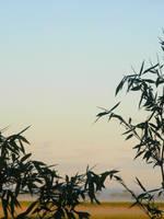 Bamboo 6 by SammiStock