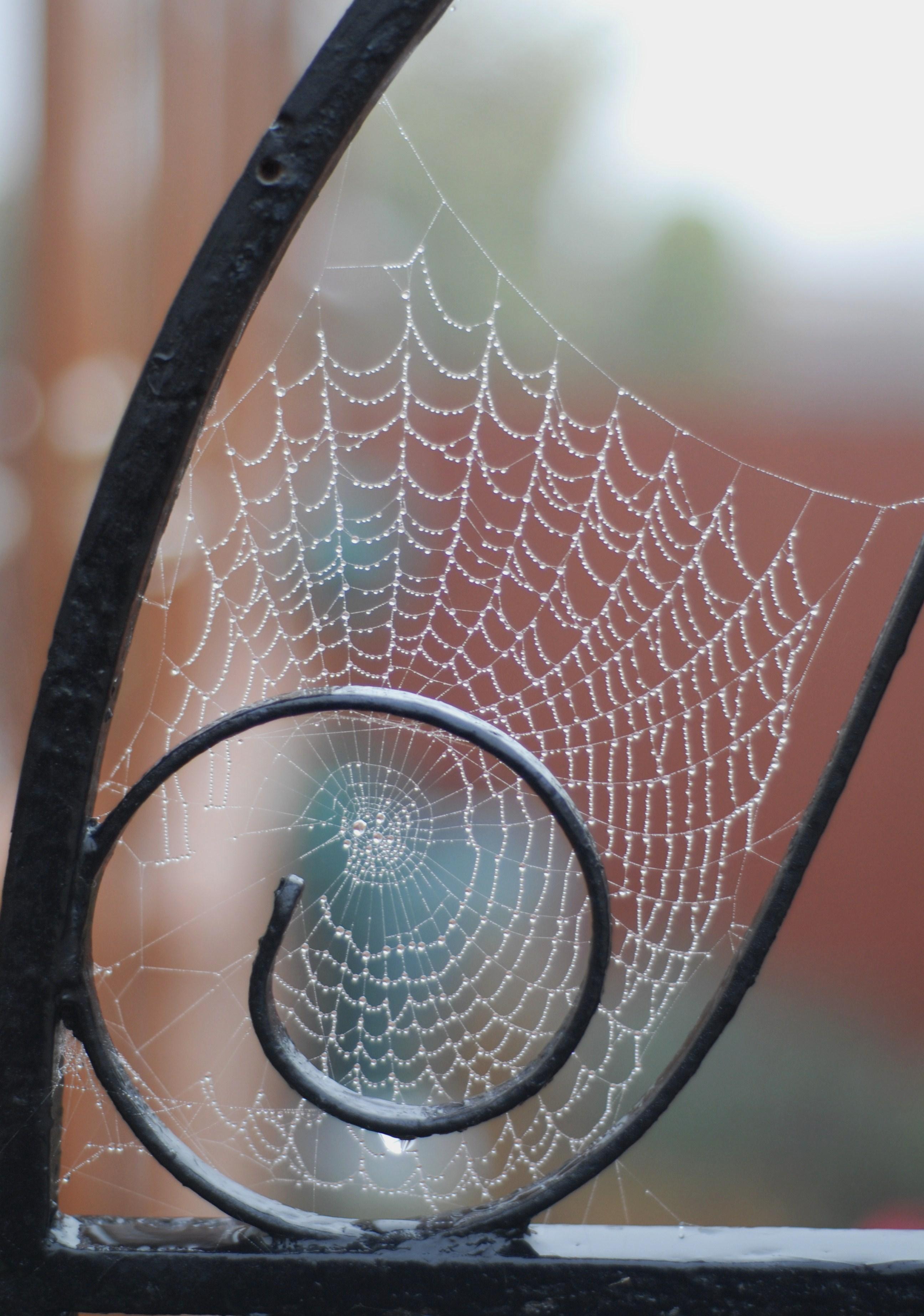 Golden Web by Meluzina81
